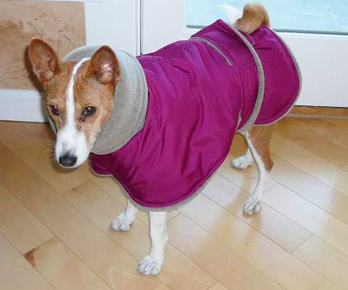 Basenji winter coat - red