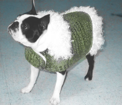 Boston Terrier in Cute Fleece Coat