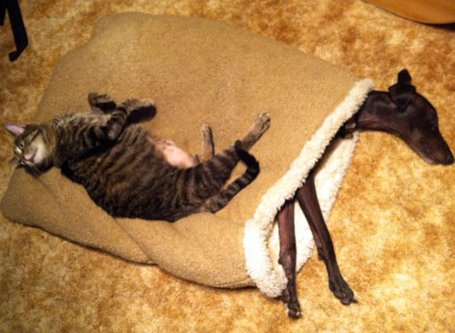 cat on pita bed