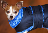 chihuahua winter dog coat small