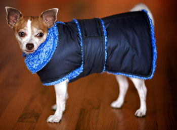 chihuahua dog coat
