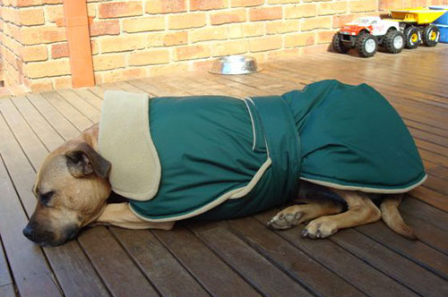 sally's dog coat - australia