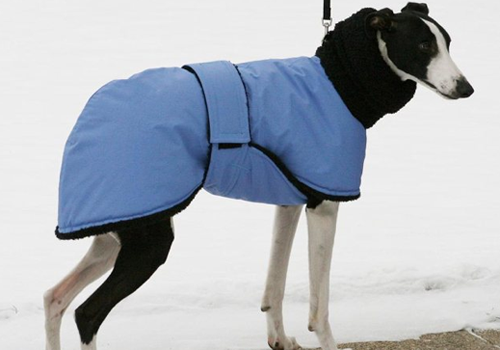 blue & black dog coat