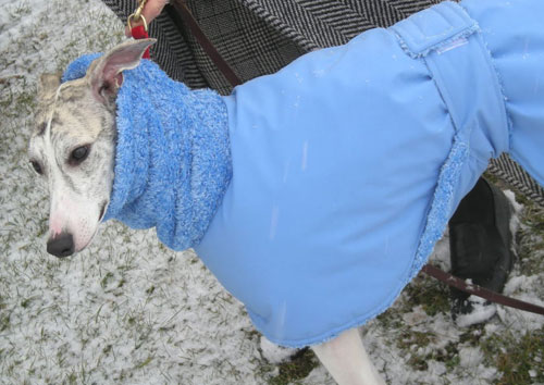How To Choose Your Dog Raincoat Or Winter Coat Blue