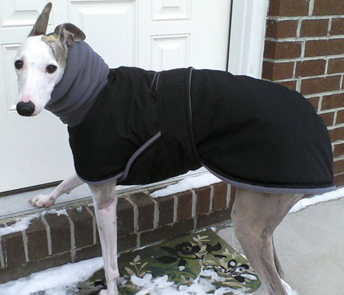Photos: Whippet Coats, Greyhound Coats & more | Blue Willow Dog Coats