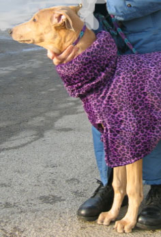 Greyhound purple jacket