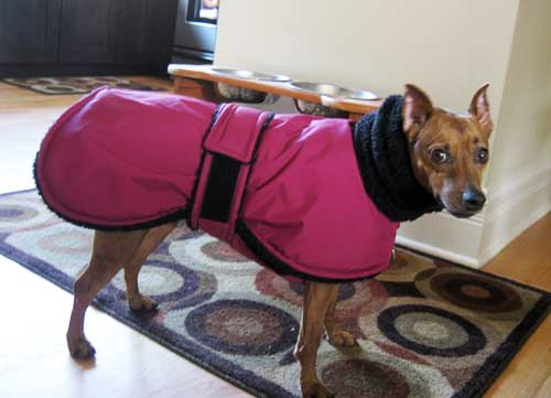 min pin red winter dog coat