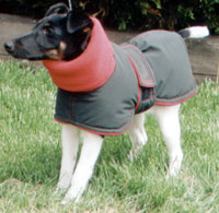 Dog in western styled coat